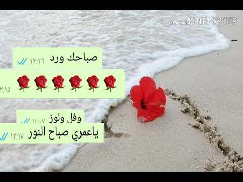بالصور صباح الورد حبيبتي , اجمل تشكيله صور صباح الورد حبيبتي 4258 3