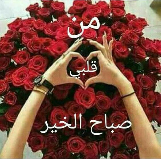 صباح الورد حبيبتي اجمل تشكيله صور صباح الورد حبيبتي حبيبي