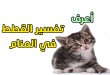 بالصور تفسير حلم قطة 10585 1 110x75