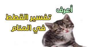 بالصور تفسير حلم قطة 10585 1 310x165