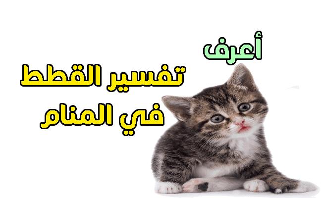 صور تفسير حلم قطة