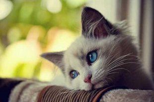 صور صور جميلة للقطط , اجمل واحدث صور للقطط