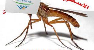 صورة افضل شركة مكافحة حشرات بالمدينة المنورة , اروع الشركات لمكافحة الحشرات