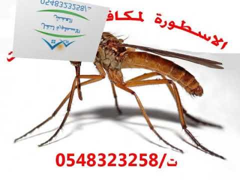 صور افضل شركة مكافحة حشرات بالمدينة المنورة , اروع الشركات لمكافحة الحشرات