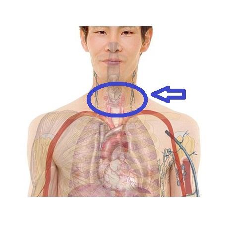صورة علاج خمول الغدة الدرقية بالعسل , اثار خمول الغدة الدرقية