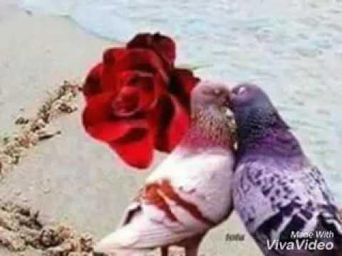 بالصور صورعن الحب , اروع العبارات البسيطة عن الحب 1766 7