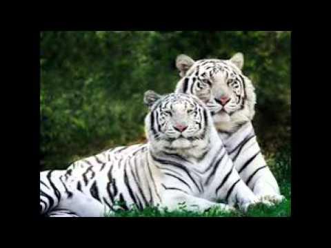 بالصور صور حيوانات , اروع واجمل الحيوانات الاليفة 2149 2
