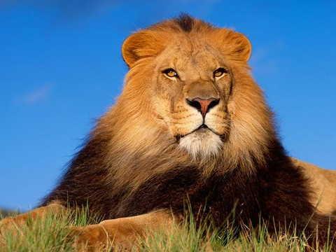 بالصور صور حيوانات , اروع واجمل الحيوانات الاليفة 2149 4