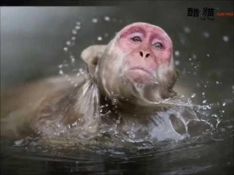بالصور صور حيوانات , اروع واجمل الحيوانات الاليفة 2149 7