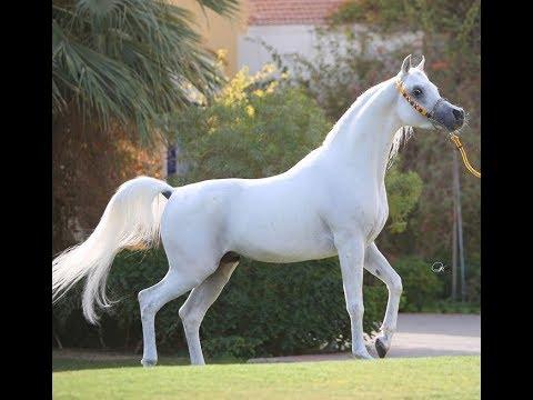 صور زمن الخيول البيضاء , اروع واجمل الروايات الجميلة