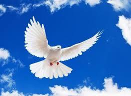 صورة الطير في المنام , دلائل الطير فى المنام
