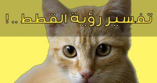 صورة رؤية القطط بالمنام , تفسير الحلم بالهره