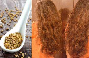 صورة الحلبة لتطويل الشعر , اسرع وصفة تقوم بتطويل شعرك