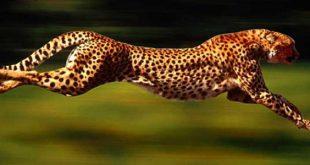 اسرع حيوان في العالم , تعرف على اكثر حيوان سرعه