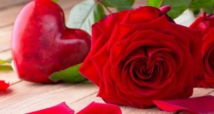 صور صور اجمل الورود , اجمل رمزيات الزهور