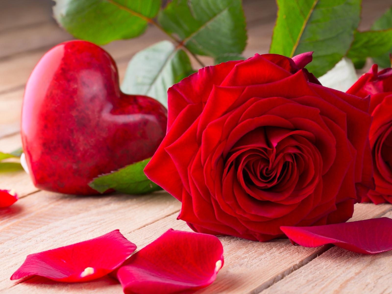 صورة صور اجمل الورود , اجمل رمزيات الزهور
