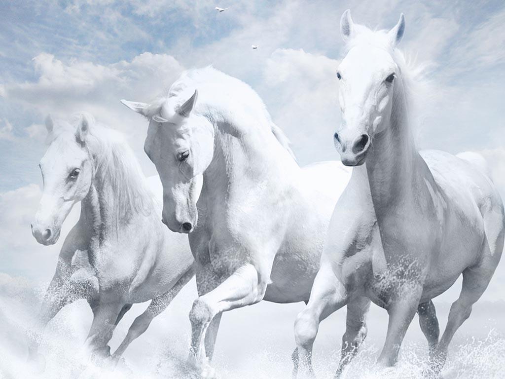 صور حصان رمزيات خيول روعه حبيبي
