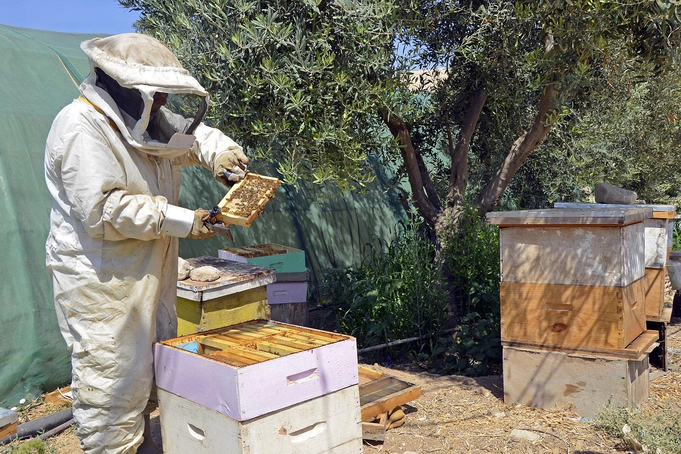 صورة تربية النحل , كيفية تربيه النحل
