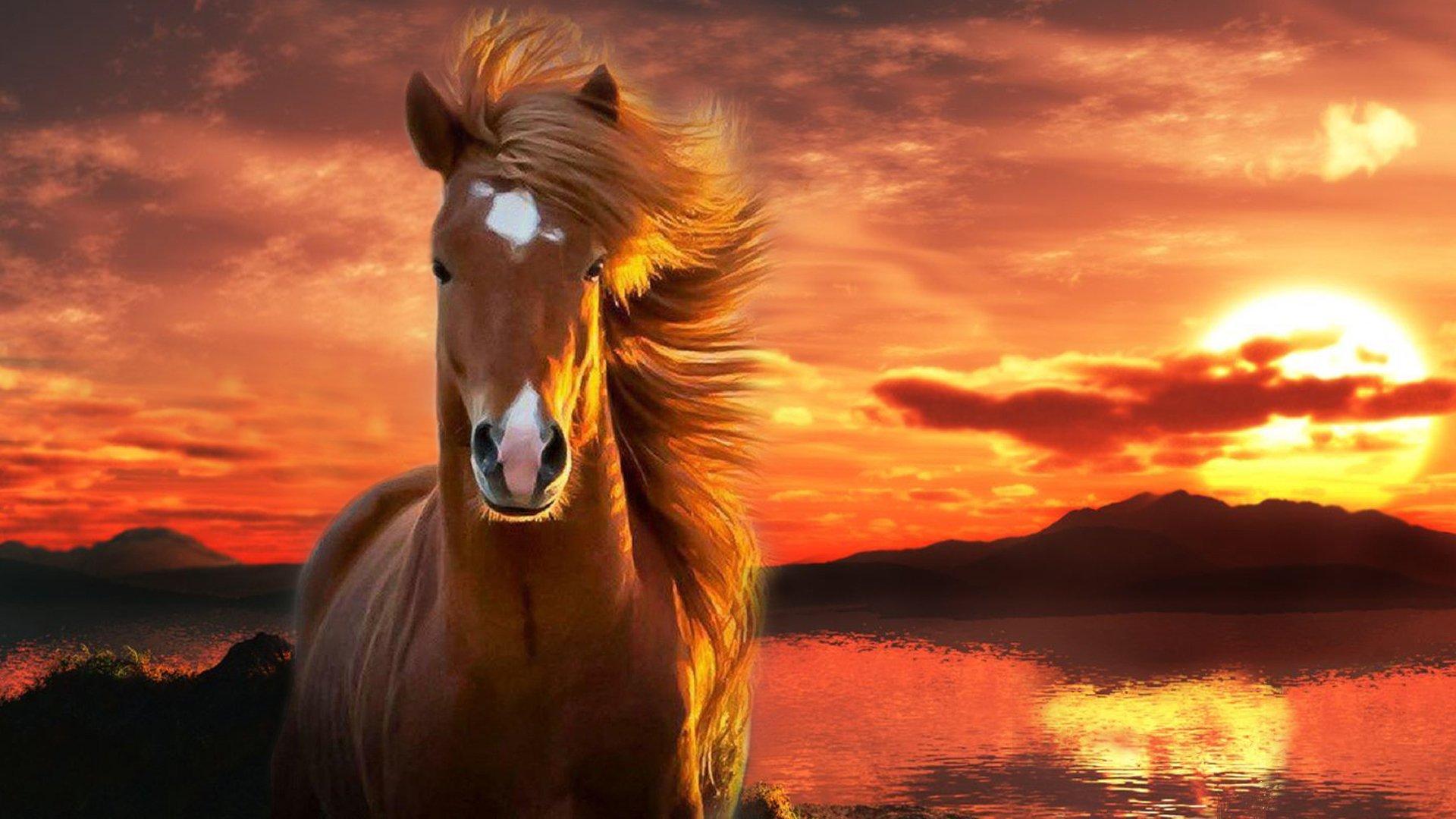 صورة خيول عربية , صور حصان عربي اصيل