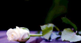 صورة صور ورد حلوه , الازهار باجمل اللقطات