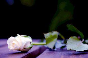 صور صور ورد حلوه , الازهار باجمل اللقطات