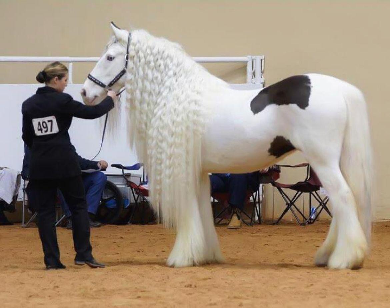 صورة اجمل حصان في العالم , افضل صور خيول بالدنيا