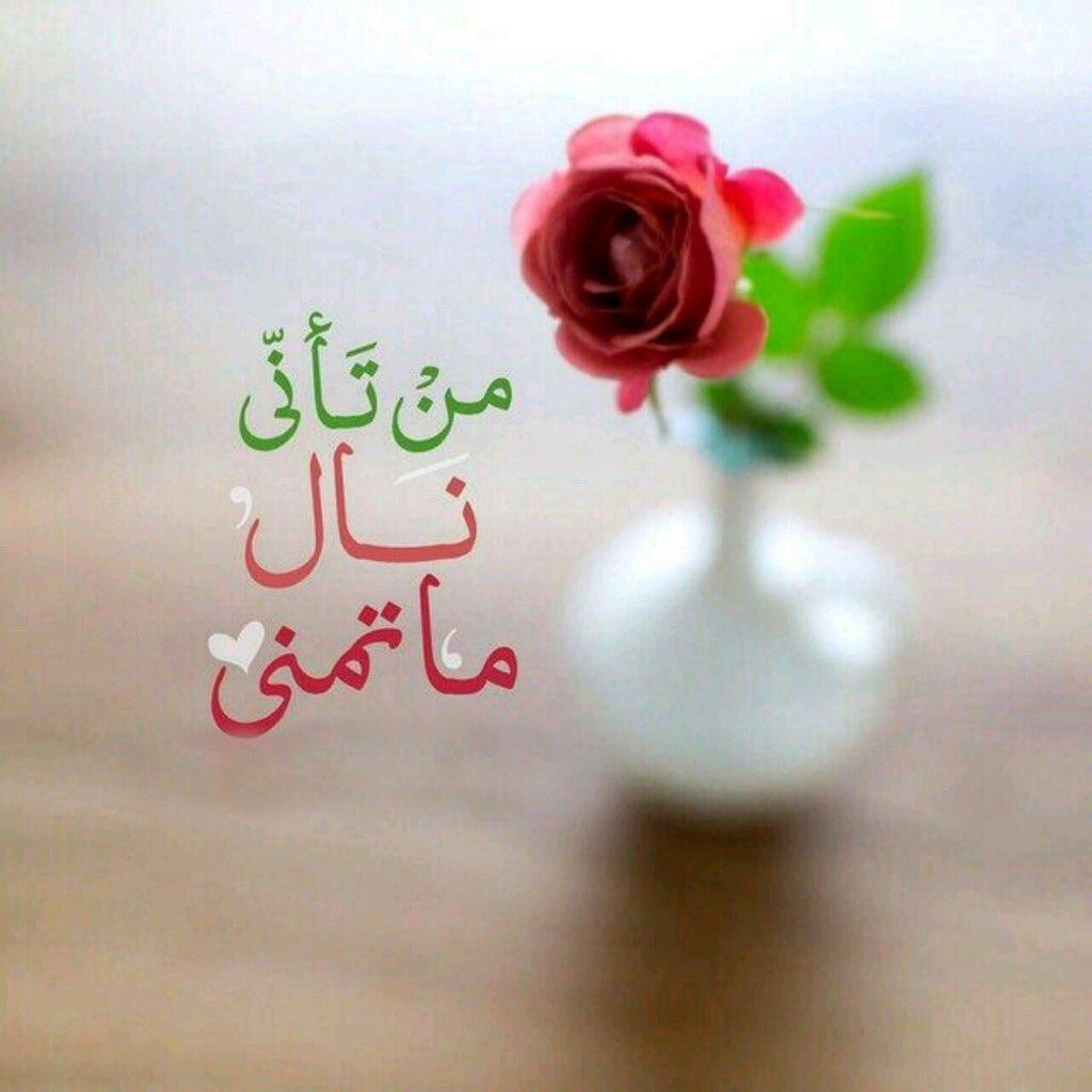 صورة كلمات من ورود , اروع الجمل بخلفيه زهور 5305 4