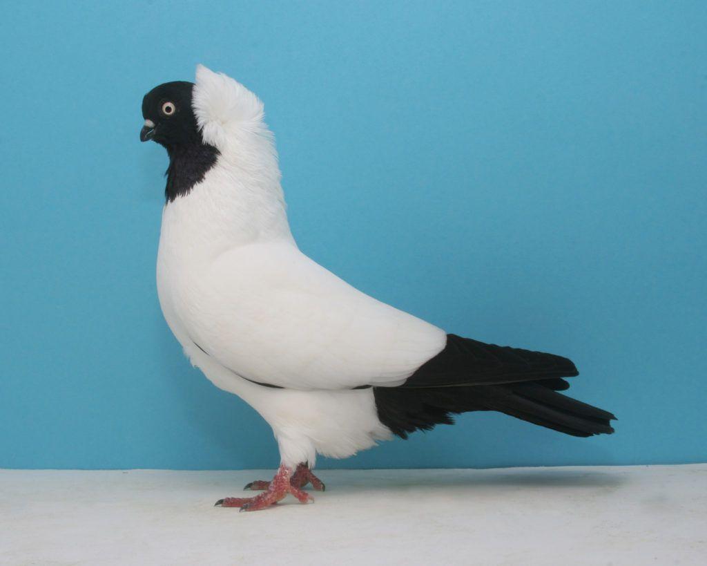 صورة احلى حمام , صور لطيور الحمام الجميله