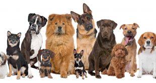 صورة انواع الكلاب , تعرف على فصائل الكلاب