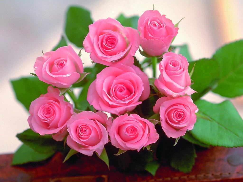 صورة صور اجمل ورد , افضل خلفيات زهور